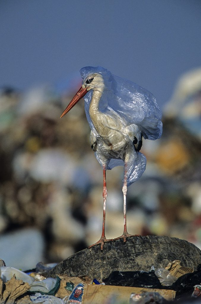 Tips to Cut Down Our Daily Plastic Use